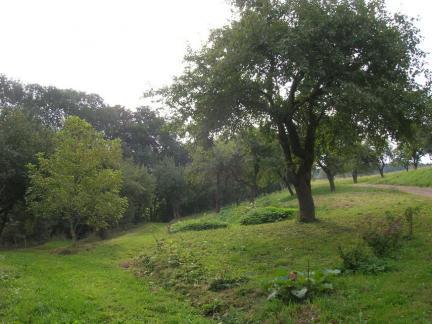 Ribisel und Apfelbäume
