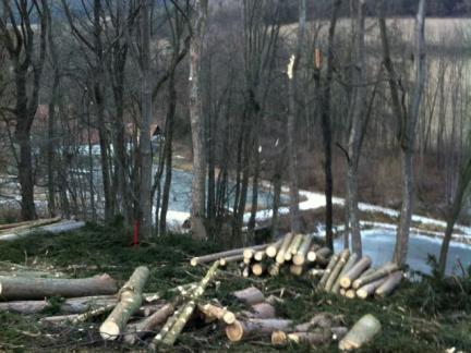 Fällen der Nadelbäume oberhalb des unteren Teiches