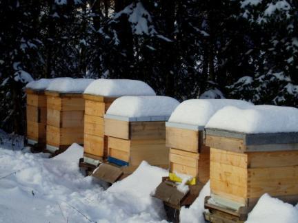 2010: zuerst ein schneereicher Winter