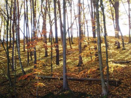 Wald beim unteren Teich