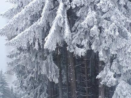 Feber/März: 3 Wochen Kur in Ottenschlag .. -18 Grad!