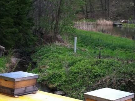 """2012 bauen wir den Bienen die """"Teichterrasse""""."""