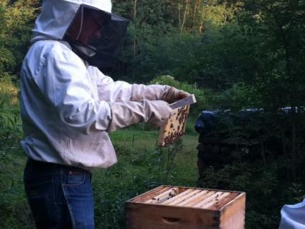 ... so viele Bienen auf den Waben.