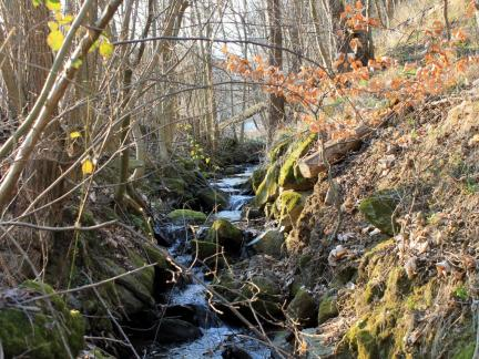 März 14, Bachlauf neben dem Teich
