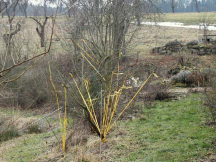 Obstbäume in Form bringen (März)