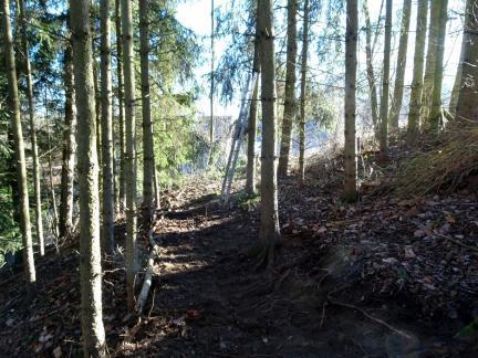 Ein Waldwegerl entsteht