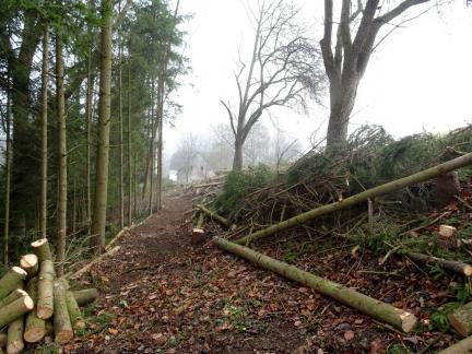 S. fällt über 50 Bäume am Waldrand