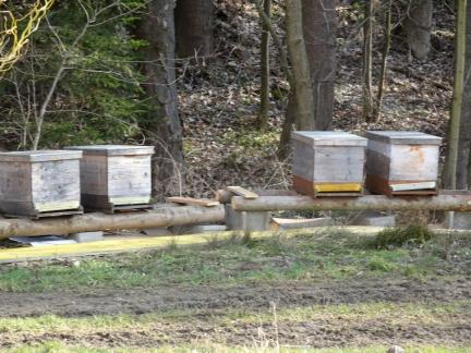 Anfang April 18: der neue Bienenplatz