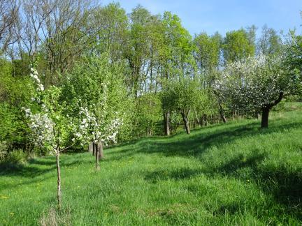 April 18: der wärmste seit ewigen Zeiten & frühe Blüte