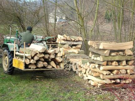 Februar 2019: Holzführen