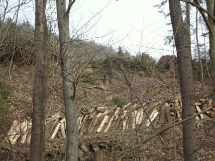 Bäumefällen an der Geländekante