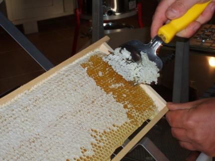 Die vollen und reifen Honigwaben werden entdeckelt.