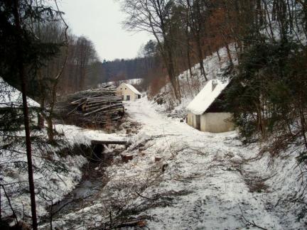 Februar: Baumfällen
