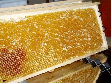 Eine volle Honigwabe