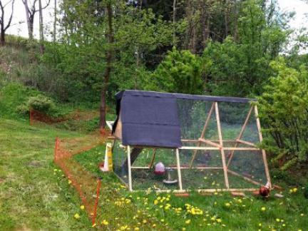 Hühnergehege im Mai