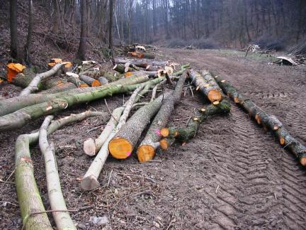 Bäume fällen für die Teiche