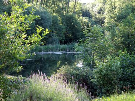 Oberer Teich, Sommer 16