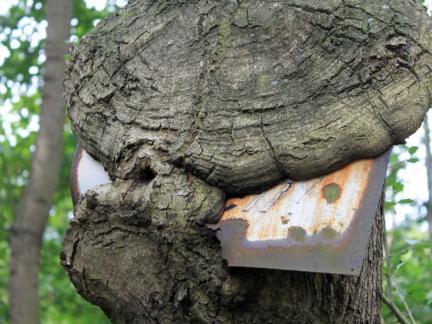 Baum frisst Schild!