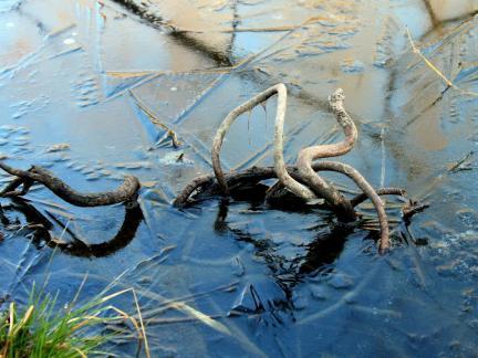 Das Eis am Teich schmilzt