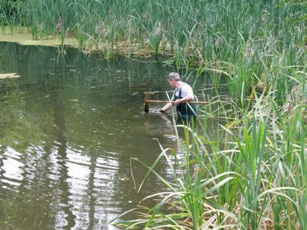 Algenausfischen im unteren Teich (Juni)