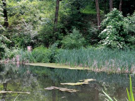 Sommer 16: viele Algen im unteren Teich (herausfischen ...)