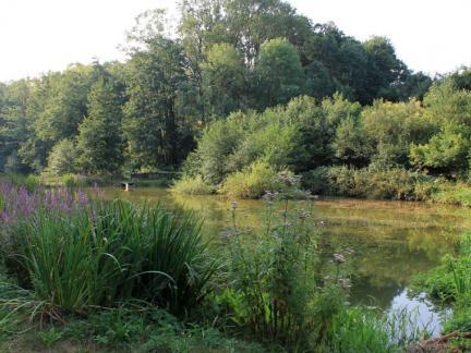 Juli 2015 Oberer Teich