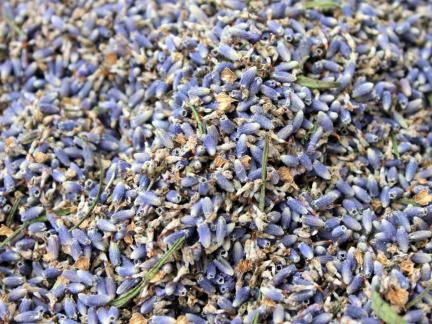 Lavendel (auch in Blaudrucksackerl)