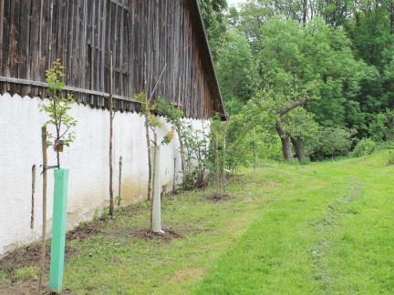 2 Marillen, 1 Mispel gepflanzt