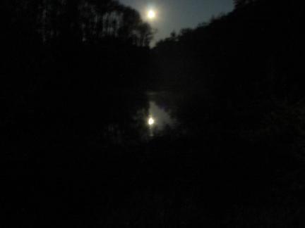 Mondnacht am Teich