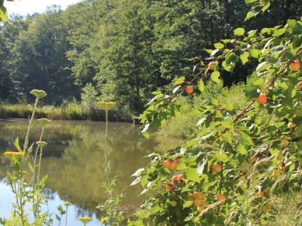 Oberer Teich Juli 13