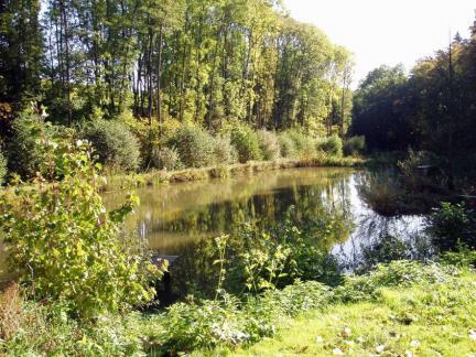 Oberer Teich,Oktober 08