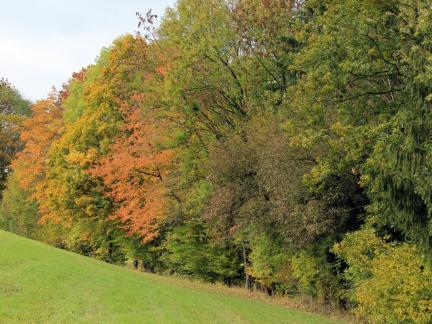 Oberer Waldrand im Herbst
