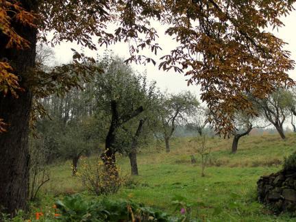 Apfelgarten, November 2014