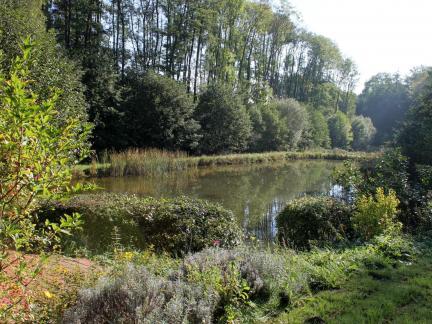 Oberer Teich, Oktober 2014