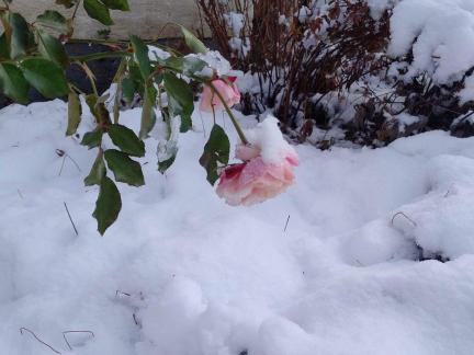 Dezemberanfang: Schnee