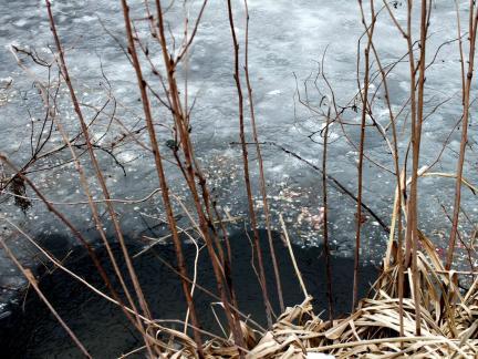 Besuch vom Fischotter im oberen Teich! (Schuppen!)