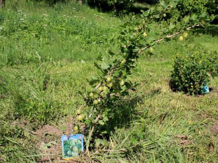 Neue Sträucher werden gepflanzt