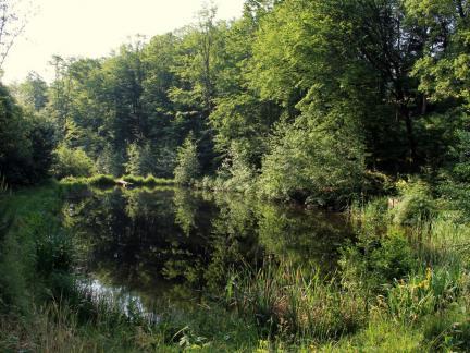 Juni 15, unterer Teich