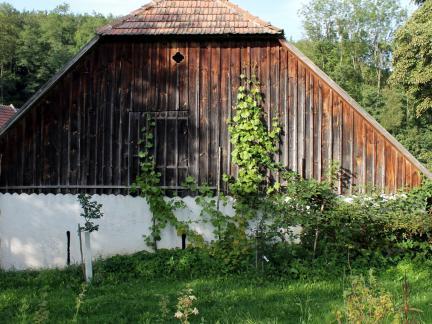 Neue Marillenbäume und Weinstock statt Kiwigestrüpp ;)